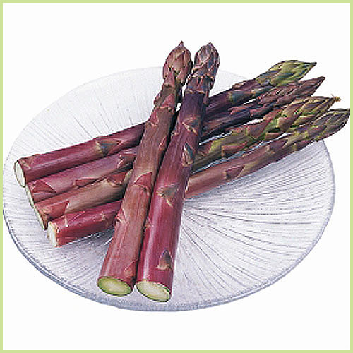 紫アスパラ(紫アスパラガス)など家庭菜園野菜の苗を販売