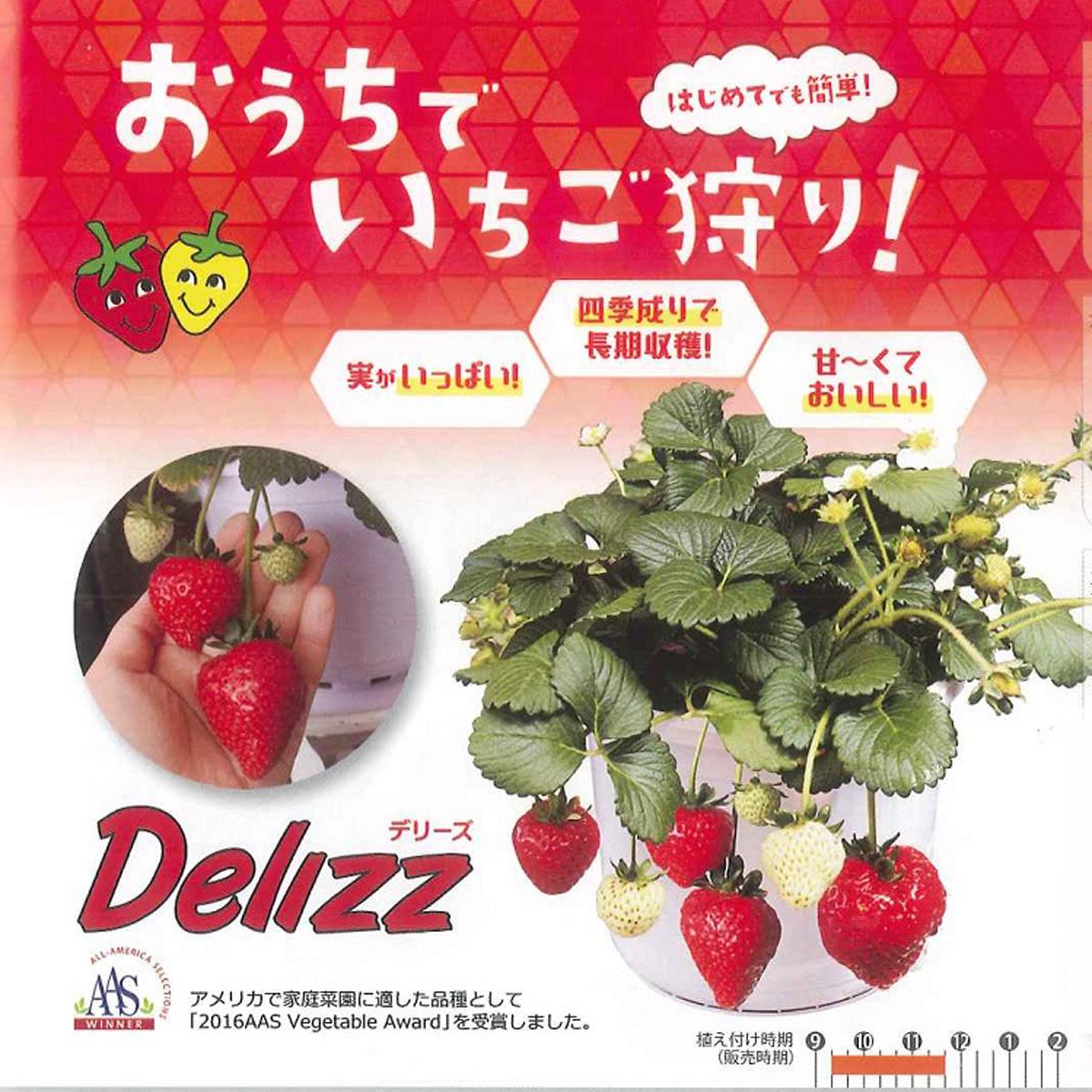 四季成りイチゴ(いちご・苺)デリーズ