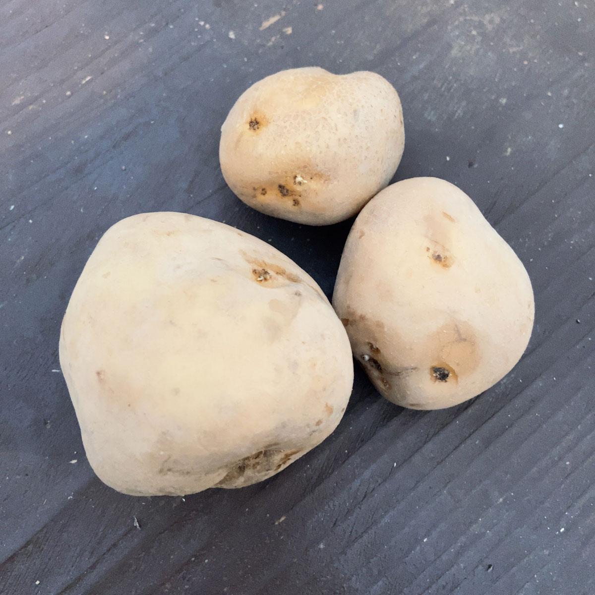 じゃがいも(ジャガイモ)・オホーツクチップの種芋