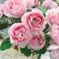 薔薇(バラ)苗木の販売店【花育通販】ビエ・ドゥ