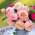 薔薇(バラ)苗木の販売店【花育通販】ペッシュ・ボンボン