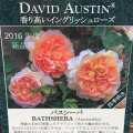 薔薇(バラ)苗木の販売店【花育通販】バスシーバ