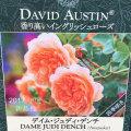 薔薇(バラ)苗木の販売店【花育通販】デイム・ジュディ・デンチ