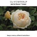 薔薇(バラ・ばら)の苗木を販売ジュード・ジ・オブスキュア