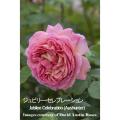 薔薇(バラ・ばら)の苗木を販売ジュビリー・セレブレイション