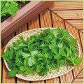 山菜・三つ葉(ミツバ)の苗を販売