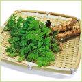 山菜・タラの木(たらの芽)の苗を販売