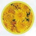 秋の花苗(多年草・宿根草)ミスティックガーデンマム・ゴールデンを販売