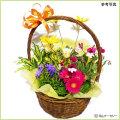 母の日フラワーギフト(カーネーション・胡蝶蘭・ミニバラ等)を販売