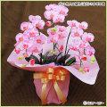 ギフト・お祝い用の胡蝶蘭(人工植物・造花)の販売店