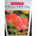 ハーブ・アプリコットゼラニウム【花育通販】
