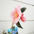 椿(つばき・ツバキ)苗木販売店「花育通販」