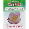 椿(つばき)の販売店【花育通販】富士曙の苗を販売