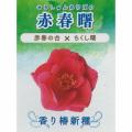 椿(つばき)の販売店【花育通販】赤春曙の苗を販売