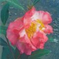 椿(つばき)の販売店【花育通販】花芙蓉の苗を販売