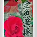 【花育通販】金魚葉椿を販売