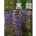 【花育通販】藤(フジ)「黒龍藤」の苗木を販売