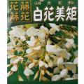 【花育通販】藤(フジ)「白花美短(シロカピタン)」の苗木を販売
