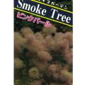 スモークツリー(けむりの木)の苗木・ピンクパール