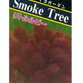 スモークツリー(けむりの木)の苗木・リトルルビー