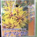 シナマンサク(支那万作)の苗木