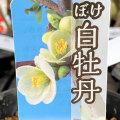 木瓜(ボケ)・白牡丹(はくぼたん)の苗木