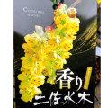 香り土佐水木(かおりとさみずき)/シナミズキ