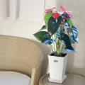 観葉植物の販売店【花育通販】観葉植物アンスリウム・赤花系6号鉢植えを販売しています