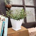 観葉植物の販売店【花育通販】ミニ観葉植物ワイヤープランツ(ミューレンベッキア)を販売しています