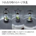 多肉植物寄せ植え(アジアンプランツ・ライト付き)