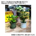 ミニ観葉植物(グロウコンテナ12型植え-3個セット)