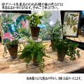 【デスク・グリーンインテリア】ミニ観葉植物(エコポット 匠4号-3個セット)