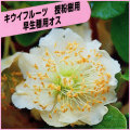 キウイフルーツ苗木を販売