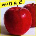 林檎(りんご)苗木を販売