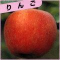 林檎(リンゴ)苗木を販売