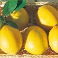 れもん(レモン)苗木販売店「花育通販」