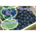 ブルーベリーの苗木販売店【花育通販】果樹苗の専門店
