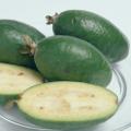 果樹苗木の販売店【花育通販】フェイジョア苗木アポロ