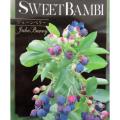 矮性ジューンベリー「スイートバンビ」の苗を販売【花育通販】