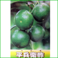 平兵衛(ヘベス)の苗木を販売【花育通販】
