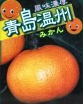 蜜柑(ミカン)の苗木 青島温州