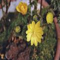 山野草・高山植物の販売店「花育通販」