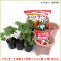 苺(いちご・イチゴ)の栽培セットを販売