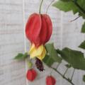 アブチロン(チロリアンランプ)の苗【花育通販】多年草・宿根草の販売店