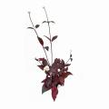 赤葉センニチコウの苗を販売【花育通販】