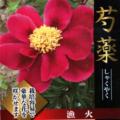 芍薬(シャクヤク)の苗販売店【花育通販】