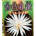 孔雀サボテン・宵待孔雀(ヨイマチクジャク)