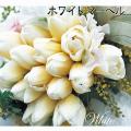チューリップ「ホワイトマーベル」の球根を販売【花育通販】