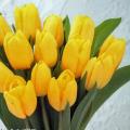 チューリップ「カンデラ」の球根を販売【花育通販】