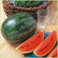 スイカ(すいか・西瓜)・メロンなど家庭菜園用の苗の販売店